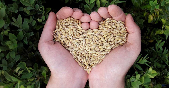 Heart Shaped Seeds In Hand