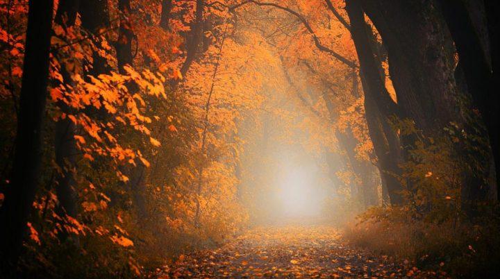 Light Shining Through Forest