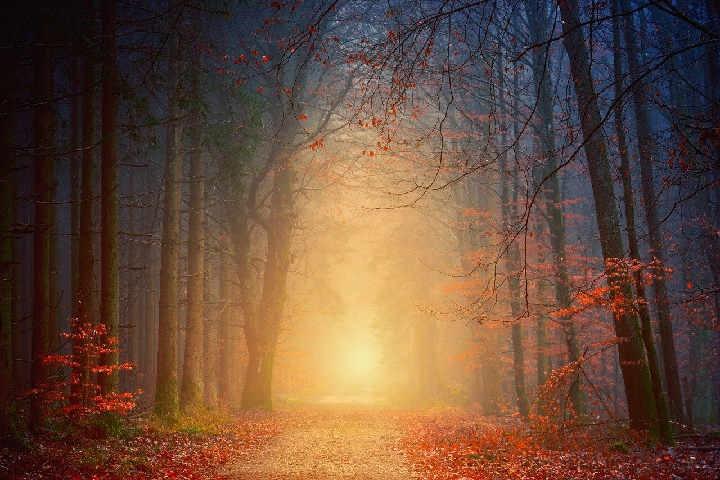 Sun Shining Thru Forest2