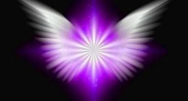Angel Wings 50percent