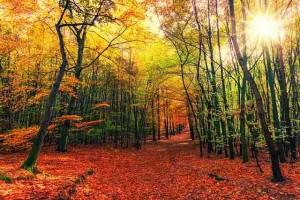 Leafy Path Thru Autumn Woods