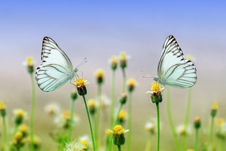 Butterflies 1127666 1280